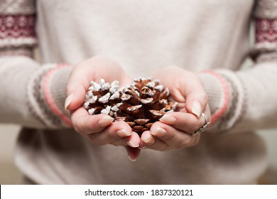 Woman in gray winter sweater holding pinecones in hands