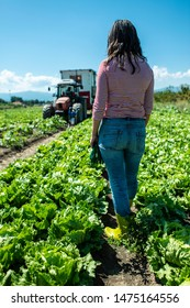 Woman with green boots in spinach field.