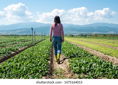 Woman with green boots walking on spinach field. Farmer in industrial vegetable garden.