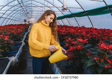 Woman in greenhouse with yellow watering can near poinsettia in pots.