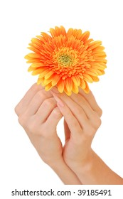Woman hand with beautiful flower isolated on white background