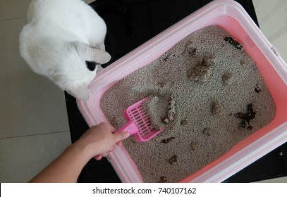 Woman hand cleaning cat litter box.
