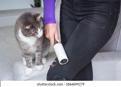Woman hand with clothes roller, lint roller or sticky roller removing animal hairs and fluff from from clothes. Cats hair on clothes
