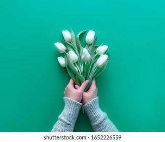 Weibliche Hand hält einen Haufen weißer Tulpen, minzgrünes Papier. Frühlingsflaeche Lage, Draufsicht mit Kopienraum, Textraum. Mütter Tag, internationale Frauen Tag 8. März, Geburtstag, Jubiläum Grußhintergrund.