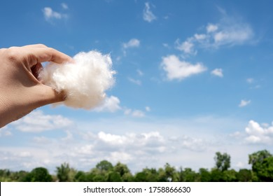 woman hand hold the Cotton wool have a blue sky and white clouds background. Look like holding a cloud in her hand.