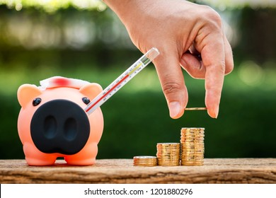 Woman hand hold a gold coin and piggy bank with  sick and use thermometer fever check hygiene on sunlight in the public park, saving money for buy health insurance concept.