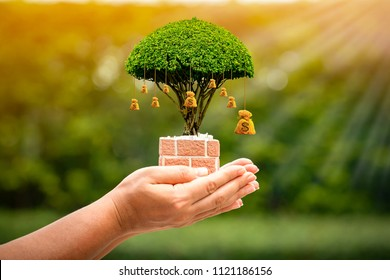 Woman hand hold the money bag of tree with growing on sunlight in the public park, Saving for business investment and give a loan concept.