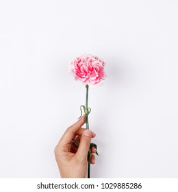 Woman hand hold pink carnation on white background. Flat lay, top view minimal festive spring flower background.
