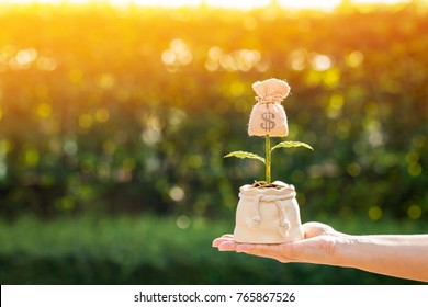 Woman hand holding a flower money bag on sunlight in the public park, Saving money and loan for asset management for investment concept.