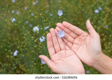 Woman hand holding flowers.