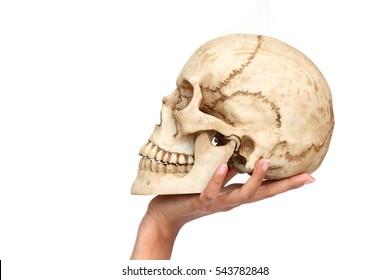 woman hand holding human skull