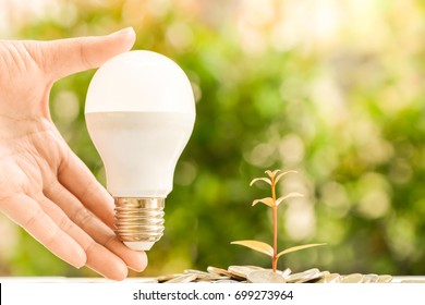 Woman hand is holding LED bulb with growing plant with sun light - saving energy concept