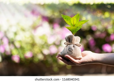 Woman hand holding a money bag  and plant growing with value on sunlight in the public park, Loans or business investment in the future concept.