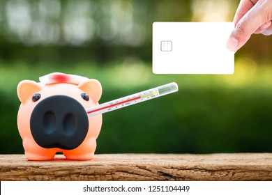 Woman hand are holding and show a white card or credit and the sick piggy bank are use thermometer fever check hygiene on sunlight in the public park, saving money for buy health insurance concept.