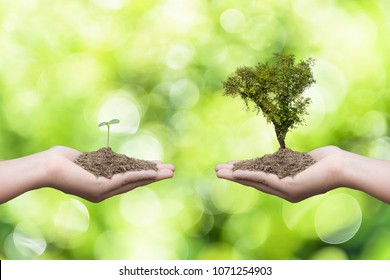 Woman hand holding young baby tree and another hand holding big tree with soil in bokeh green leaves tree background. Earth Day April 22 concept.