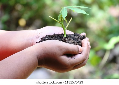 Woman hand holding young tree with soil in background, World Earth Day concept