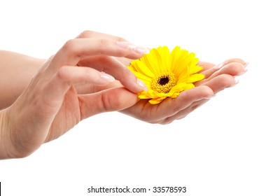 Woman hand with long fingernails picking petals from a flower