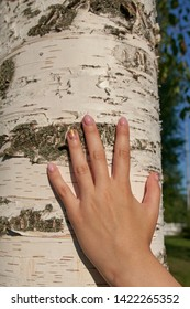 A woman hand on a birch tree.