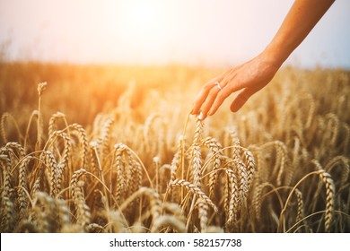 Woman hand on wheatfield