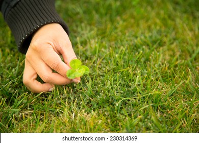 Woman hand picking four-leaf clover on grass