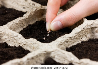 woman hand planting seed in the ground or soil. spring sowing. gardening.