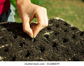Woman Hand Planting seeds on germination tray