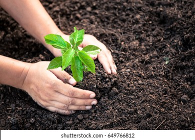 Woman hand planting young tree on black soil as save world concept in vintage color tone