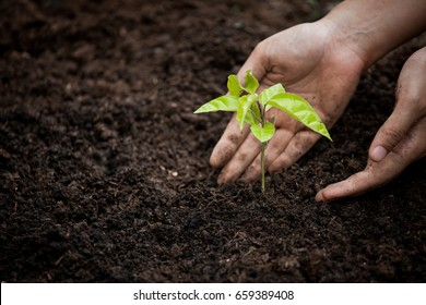 Woman hand planting young tree on black soil as save world concept - Shutterstock ID 659389408