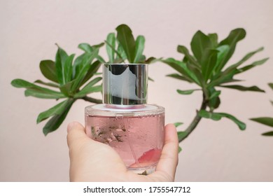 Woman hand show and hold perfume bottle, stock photo