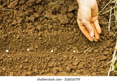Seed Sowing Stock Photos Images Photography Shutterstock
