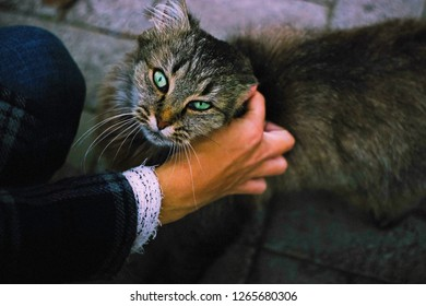 Woman hand stroking street cat. People support pets. Human hand caresses abandoned homeless animal connection. Concept trust and friendship - people & cats. Female stroking tabby stray joy cat outdoor