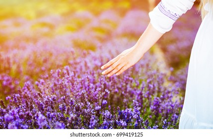 Woman hand touching lavender bushes at sunny summer day
