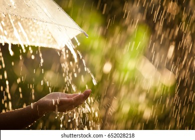 Woman hand with umbrella in the rain in green nature background