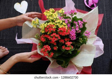 Woman hand wrapping paper for flower pot in special day celebration,  flora blossom beautiful in yellow, red and pink color, girl prepare present from high view on black blur background indoor on day