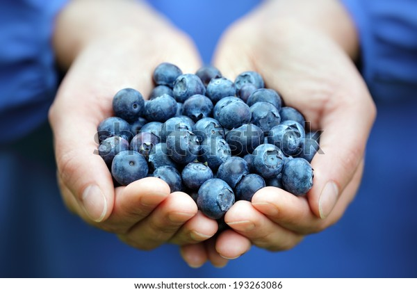 Woman with handful of freshly picked organic blueberries