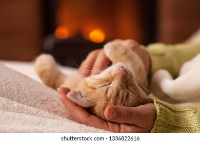 Woman hands caressing a belly up sleeping kitten in front of the fireplace - close up