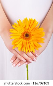 Woman hands with french manicure holding yellow flower
