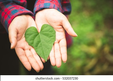 woman hands with green leaf with heart shape.Love you.Heart in hand.