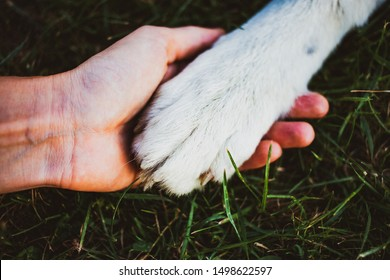 woman hands holding dog paws - animal care