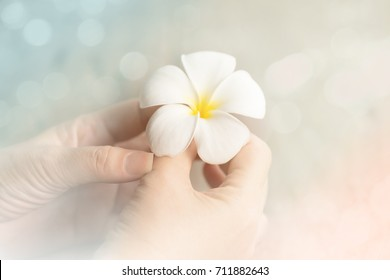 Woman hands holding white flower,soft focus ,filter effect. Flower plumeria please forgive me.