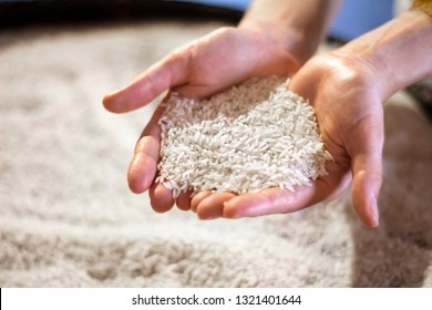 woman hands holding white rice