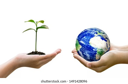 Woman hands holding world or globe and holding sprout on earth day.Environment conservation and energy saving concept.Elements of this image are furnished by NASA.