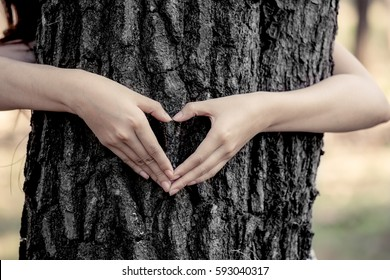 woman hands making a heart shape around a big tree as love nature concept in dark tone