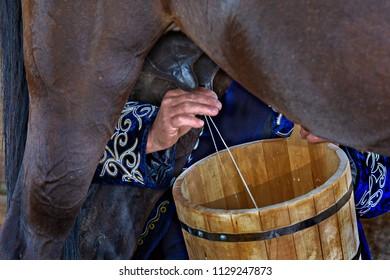 Woman hands milking the horse into a wooden bucket, Bishkek, Kyrgyzstan.