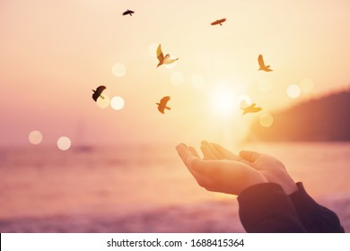 Woman hands place together like praying in front of nature blur beach and birds fly with sunset sky freedom concept background.