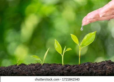 Woman hands planting and watering a young green plant. Save the world, World Earth Day or World Environment Day concept with copy space for advertisers.