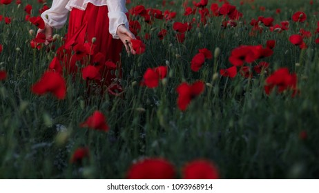 Woman hands in a poppy field with flowers