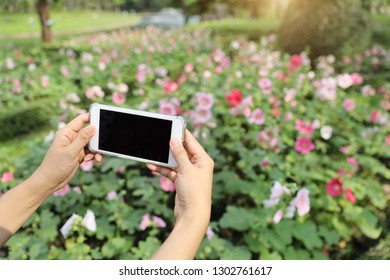 woman hands taking picture of flowers with cell phone