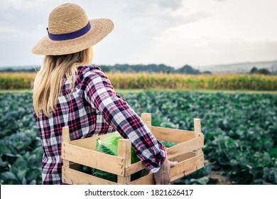 Woman harvesting cabbage at vegetable field. Female farmer with straw hat is holding wooden crate. Gardening and agricultural activity during autumn season