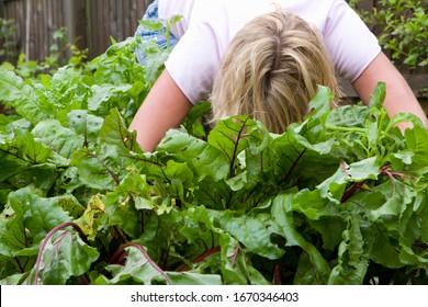 Woman harvesting fresh beetroot from vegetable garden
